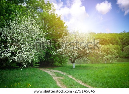 A spring landscape is with flowering apple-trees - stock photo
