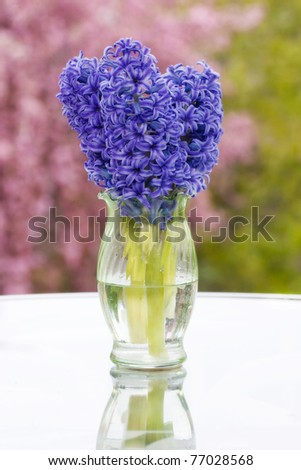 A spring scene, with a vase of purple hyacinths on a glass table, with pink blossoms and green trees blurred in the background. - stock photo