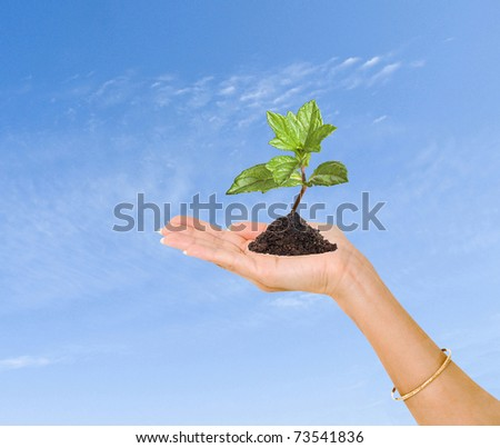 A sprout in hand as a symbol of nature protection - stock photo