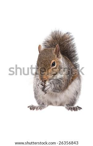 A squirrel - stock photo