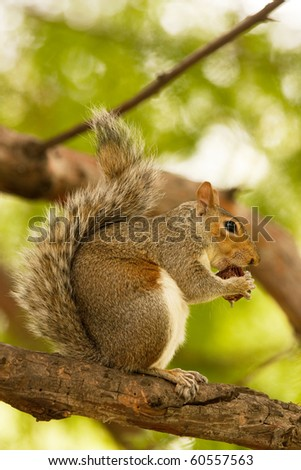 A squirrel eating on a tree branch - stock photo