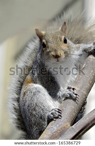 A squirrel in a tree caught stealing from a bird feeder. - stock photo