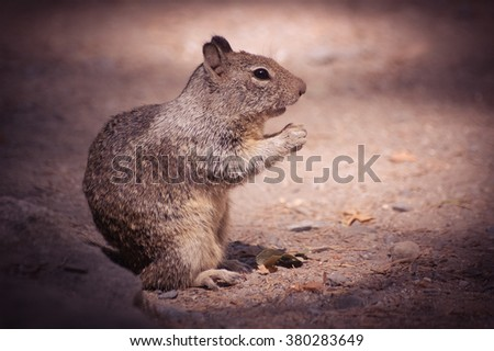 A Squirrel in a Yosemite National Park in California