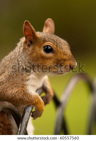 A squirrel leaning over a fence railing in a park - stock photo