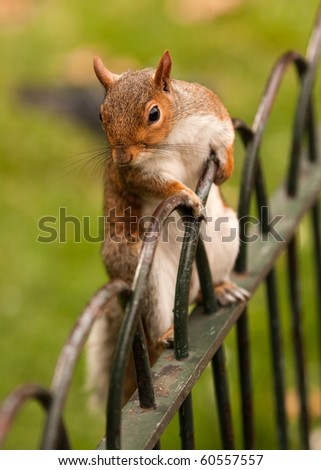 A squirrel standing on a fence railing - stock photo