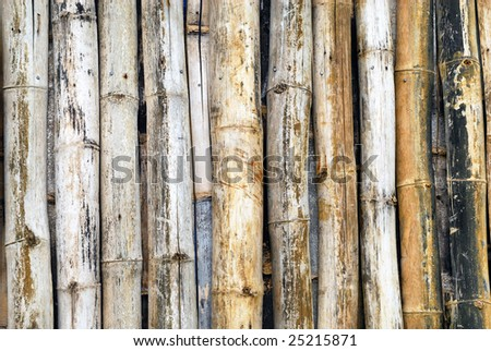 A stack of Bamboo sticks on a tropical forest - stock photo