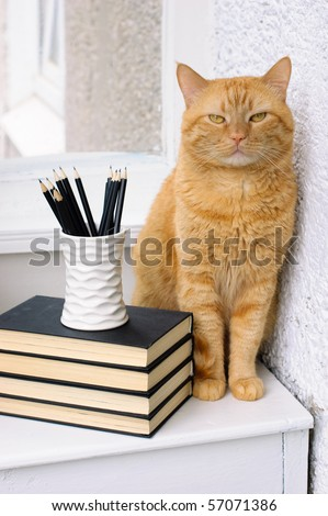 A stack of books, pencils and a big red cat on a white table - stock photo