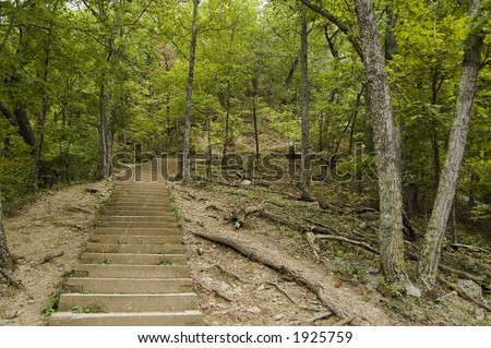 A staircase path in a densely wooded area