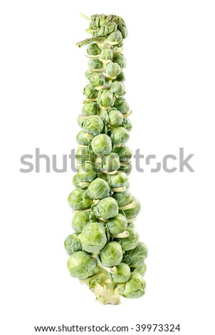 A Stalk of Brussels Sprouts