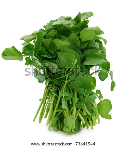 A standing water-cress bunch - stock photo