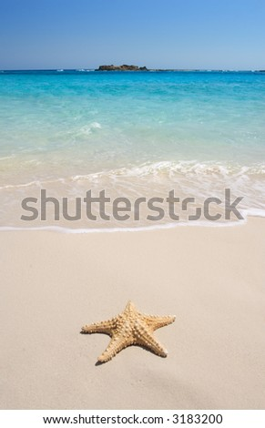 A starfish besides sea shore on a beach with white sand and blue water. - stock photo
