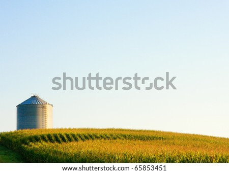 A steel grain bit sits high atop a hill surrounded by a field full of tasseling corn. - stock photo