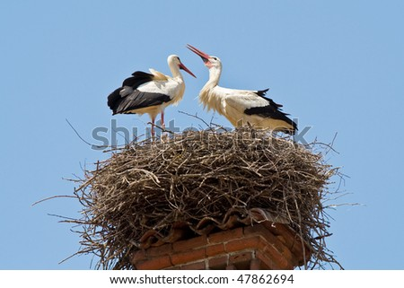 A stork couple in a nest over a chimney-pot - stock photo