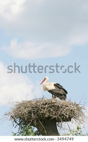 A Stork in the nest against the cloudy sky