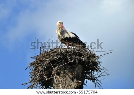 A stork standing in its nest, blue sky in the background.