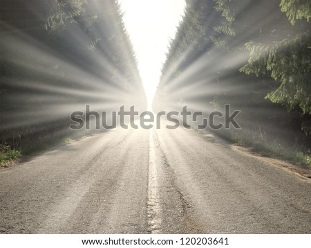 A straight asphalt road disappearing into the distance between lines of trees - stock photo
