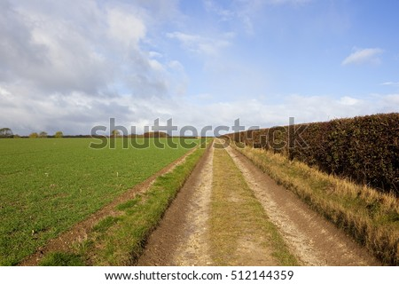 a straight farm track beside a wheat field and a hawthorn hedgerow under a blue cloudy sky in a yorkshire wolds landscape in autumn