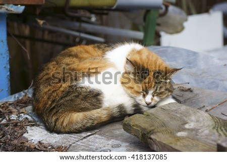 A stray cat is sleeping on the street. Close-up. - stock photo