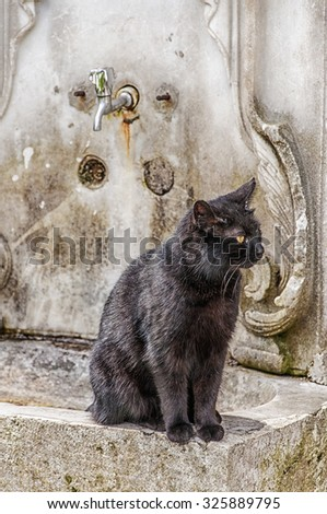 A stray cat sits at the ablution taps at a mosque in Istanbul where worshippers wash their feet. - stock photo