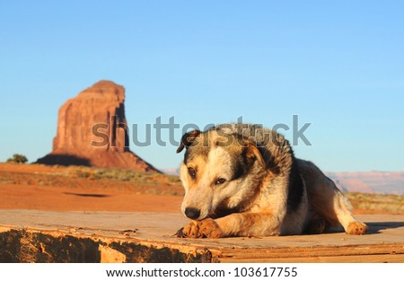 A stray dog at Monument Valley, Arizona, hoping for handouts