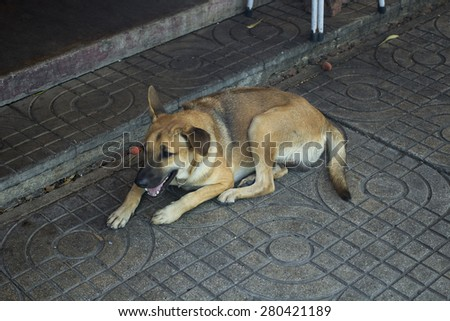 A stray dog lying down on the sidewalk