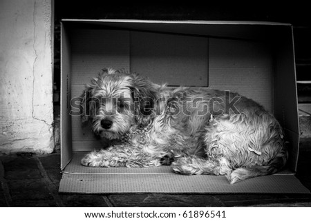 A stray dog makes his home in a cardboard box - stock photo