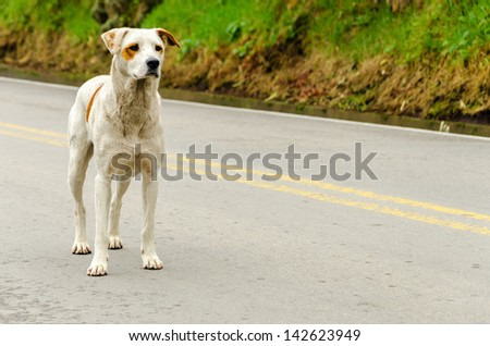 A stray dog standing in the middle of a highway - stock photo