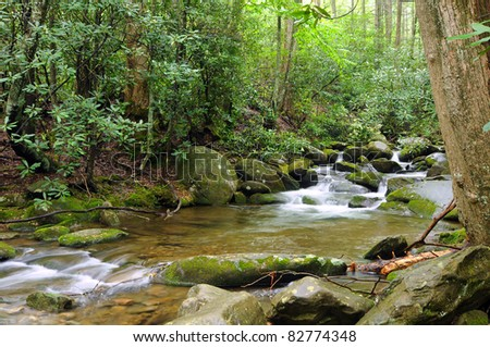 A stream rushes over boulders amid rhododendron trees - stock photo