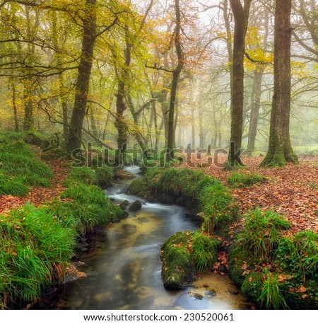 A stream winding its way through misty Autumn woodland on Bodmin Moor in Cornwall - stock photo