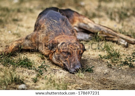 a street dog laying on a whitered field and is bored - stock photo