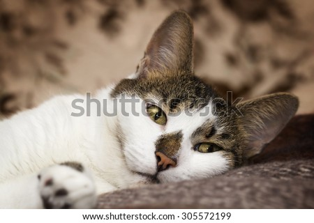 A striped white cat relaxing on the bed - stock photo