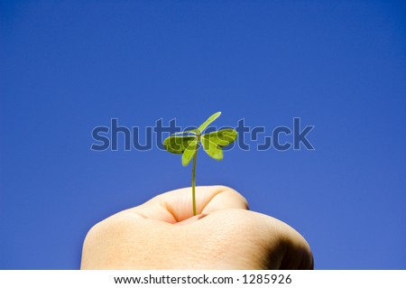 A Strong hand holding a clover under the sunny blue sky - stock photo