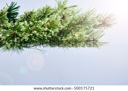 A studio photo of a christmas tree branch