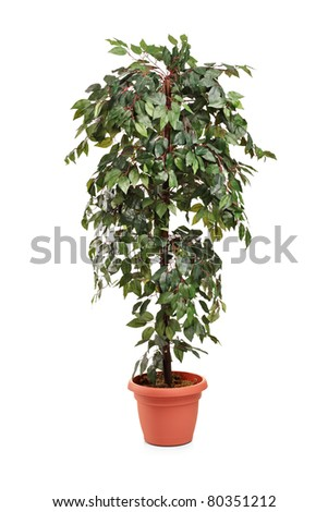 A studio shot of a decorative tree isolated on white background - stock photo