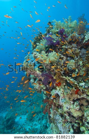 A stunning tropical coral reef scene with soft corals and fish - stock photo