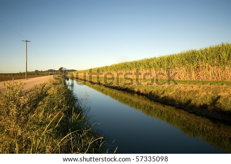 A sugar cane field, adjacent to an irrigation canal, captured in the late afternoon