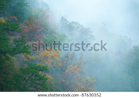 A sugar gum tree in peak fall color in the Ozark Mountains. - stock photo