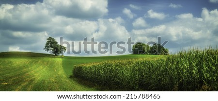 A summer field with corn, trees, and sky - stock photo