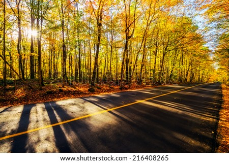 A sunburst shines through the colored trees casting long shadows across a rural road during the autumn season.    - stock photo