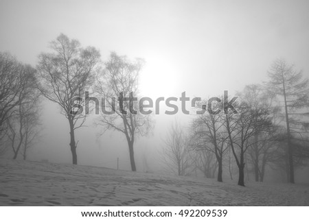 A sunny and foggy winter morning
