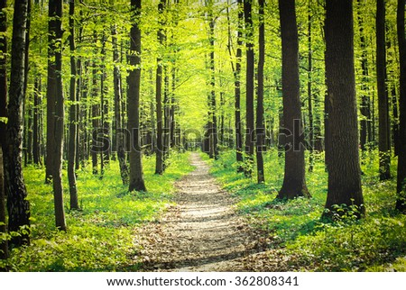 A sunny day in green forest - stock photo