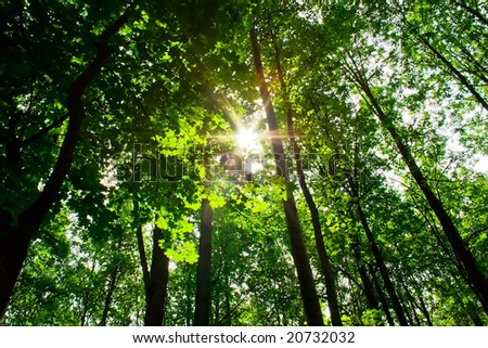 A sunny day in green forest with high trees - stock photo
