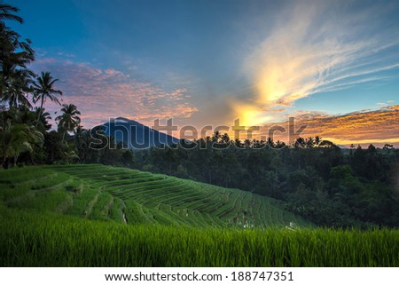 A sunrise view of the terraced rice fields on the rich fertile volcano soil hills of Bali, Indonesia. - stock photo