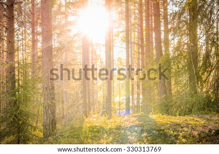 A sunset in the forest - stock photo