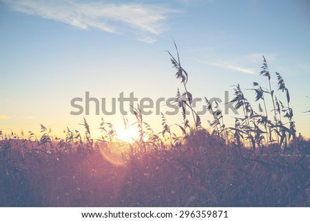 A sunset through the hay and grass in Finland. Image has a flare and vintage effect added to create more artistic flavor to the image.