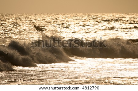 A surfer at sunset wiping out - stock photo