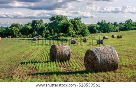 A surrealistic look at bales of hay on this field in rural Central New Jersey.