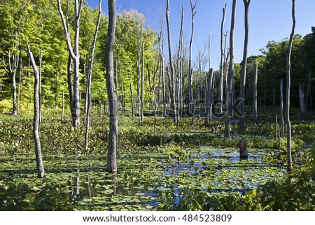 A swamp  in northeastern Ohio.