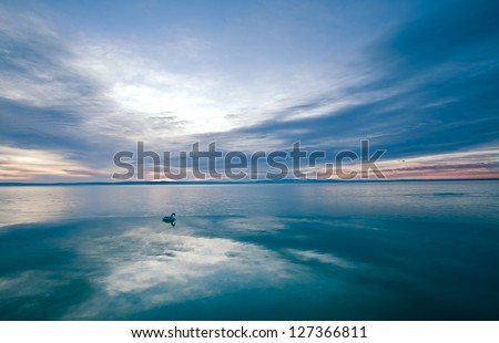 A swan swims around on the edge of the ice - stock photo