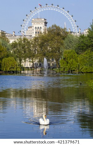 A Swan swims on the lake in St. James's Park with a view of the London Eye in the background. - stock photo